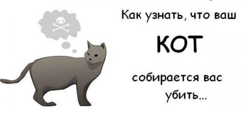 Как узнать, что ваш кот собирается вас убить )